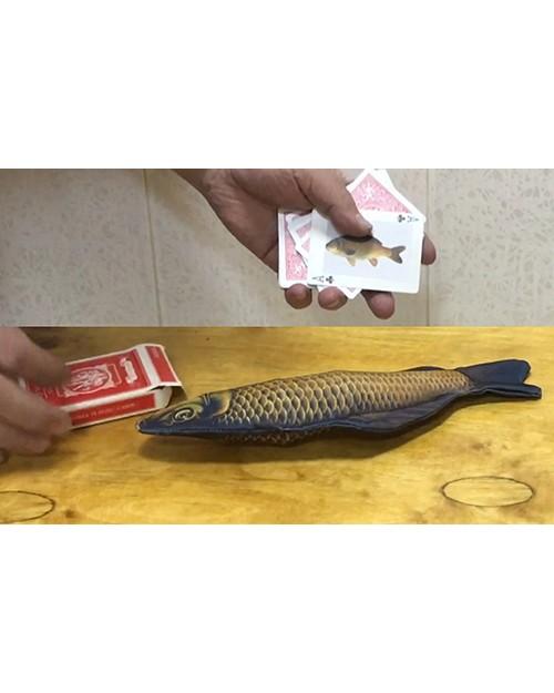 Riba iz škatle kart